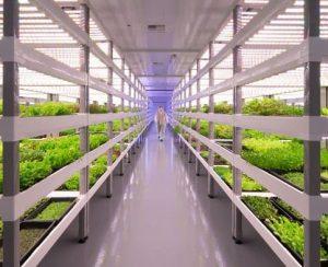 Современные вертикальные фермы и их устройство