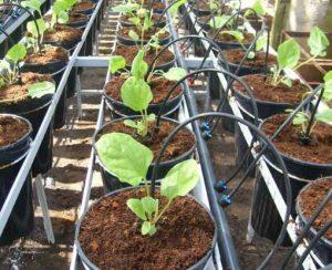 Зачем и какой субстрат используют для выращивания рассады