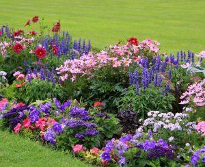 Какие красивые цветы можно смело посеять под зиму