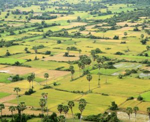 Рынок Камбоджи заполонили контрафактные удобрения