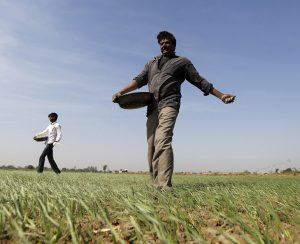 Власти Индии надеются на органическое земледелие