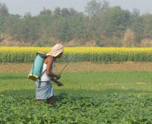 Индия запретит особо опасные пестициды