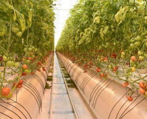 Московская область может стать лидером по тепличным овощам