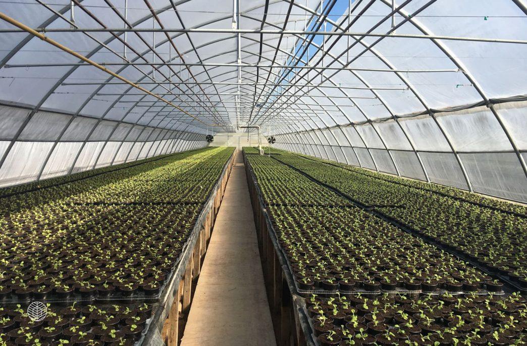 В Хабаровском крае появится новый тепличный комплекс