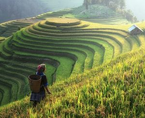 Непальские фермеры остались без удобрений