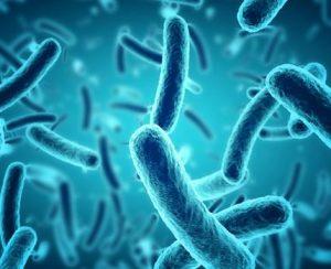 LiveGrow и IALR разработают новые биостимуляторы