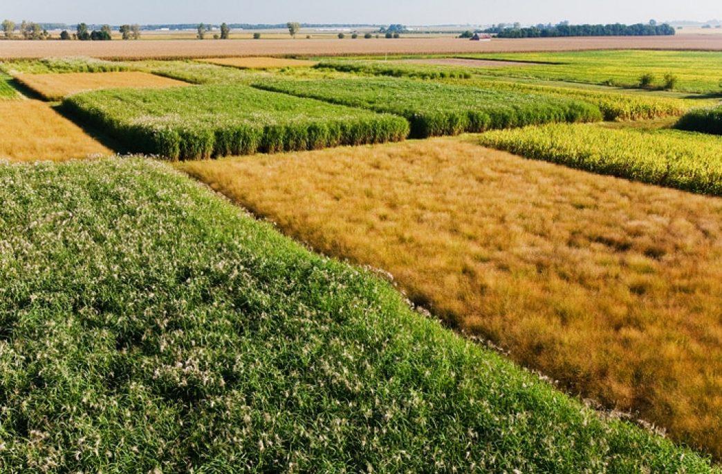 Ученые призывают перейти на биоэнергию