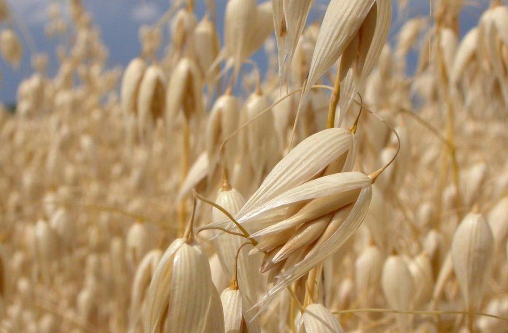 В России расширятся площади под зерновые культуры