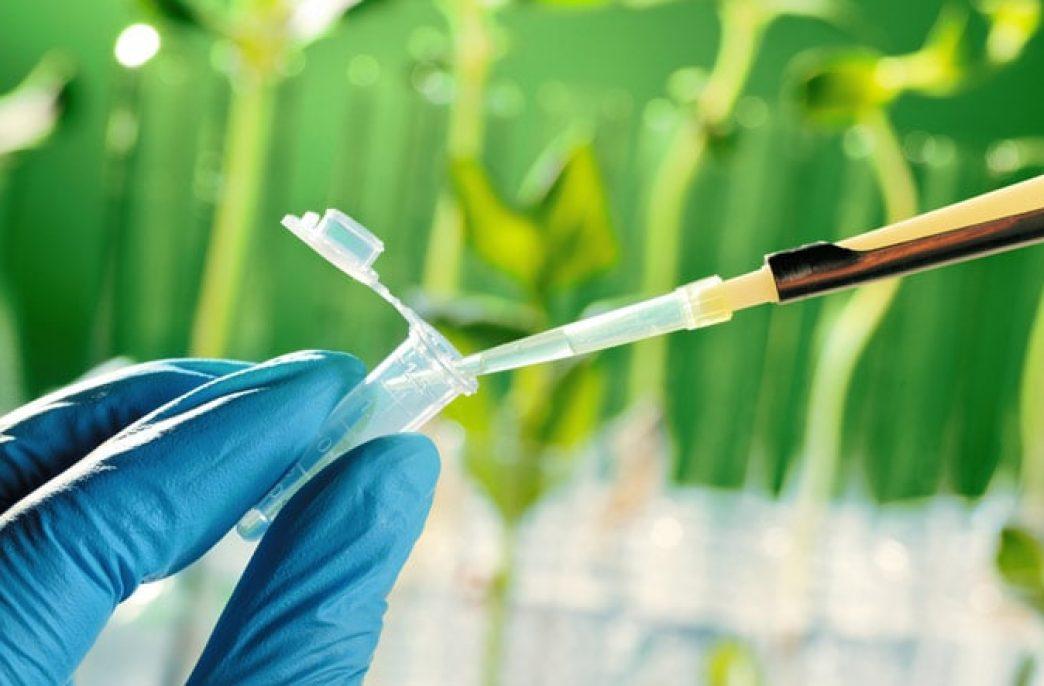 Ученые нашли способ повысить биомассу растений