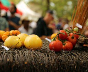 Посадка томатов под зиму в теплице
