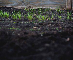 Рейтинг садовых грунтов для растений