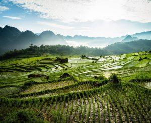 Во Вьетнаме могут ввести НДС на агрохимикаты