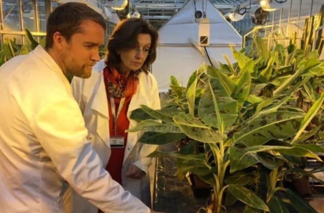 Ученые предупреждают о новых патогенах