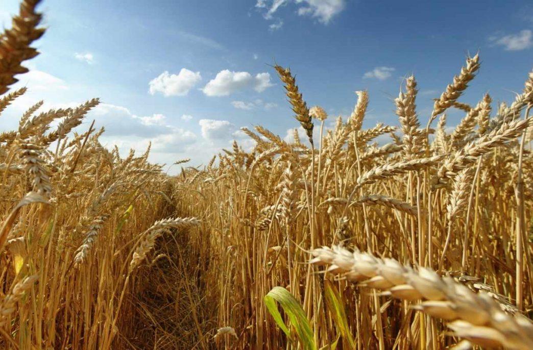 Проблемы рынка зерна обсудили в онлайне