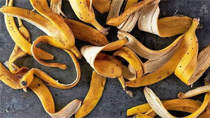 Банановая кожура как удобрение для комнатных растений и цветов: плюсы и минусы подкормки