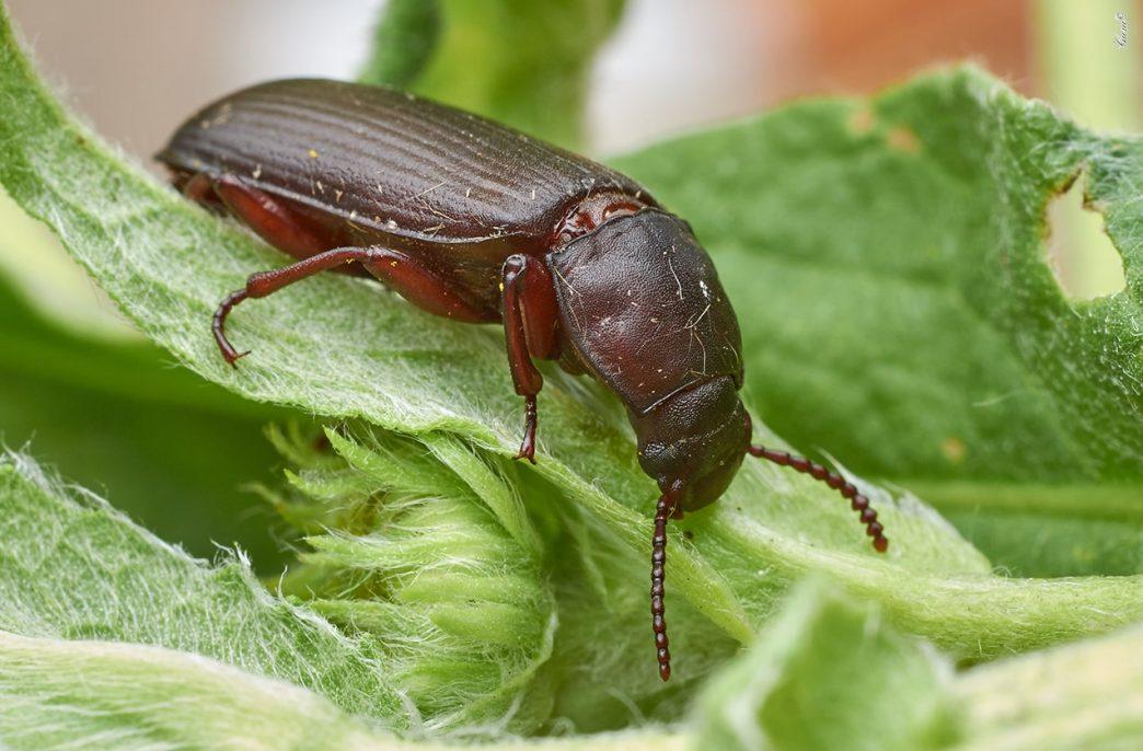 Во Франции начались продажи удобрения из жука