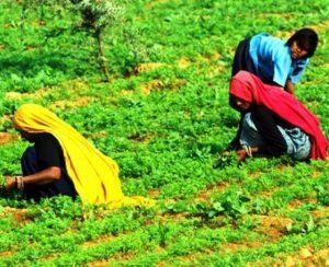 В Индии дешевеют агрохимикаты