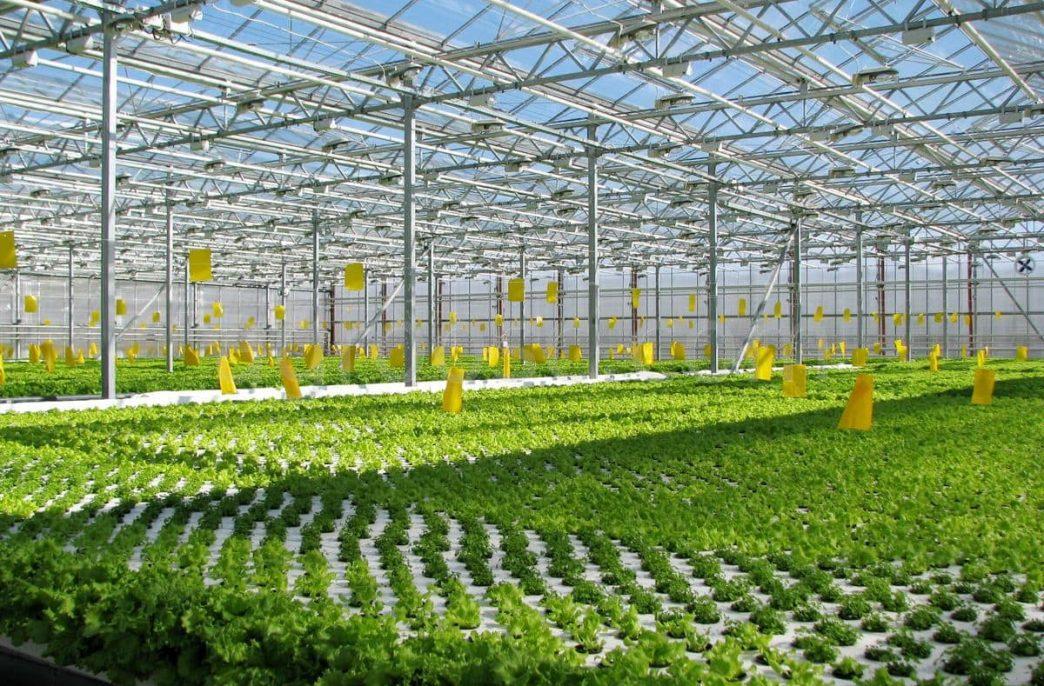 «Агроком» не будет создавать новый тепличный комплекс