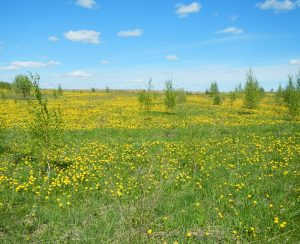 В России планируется ввести в оборот 4 млн. га неиспользуемых земель