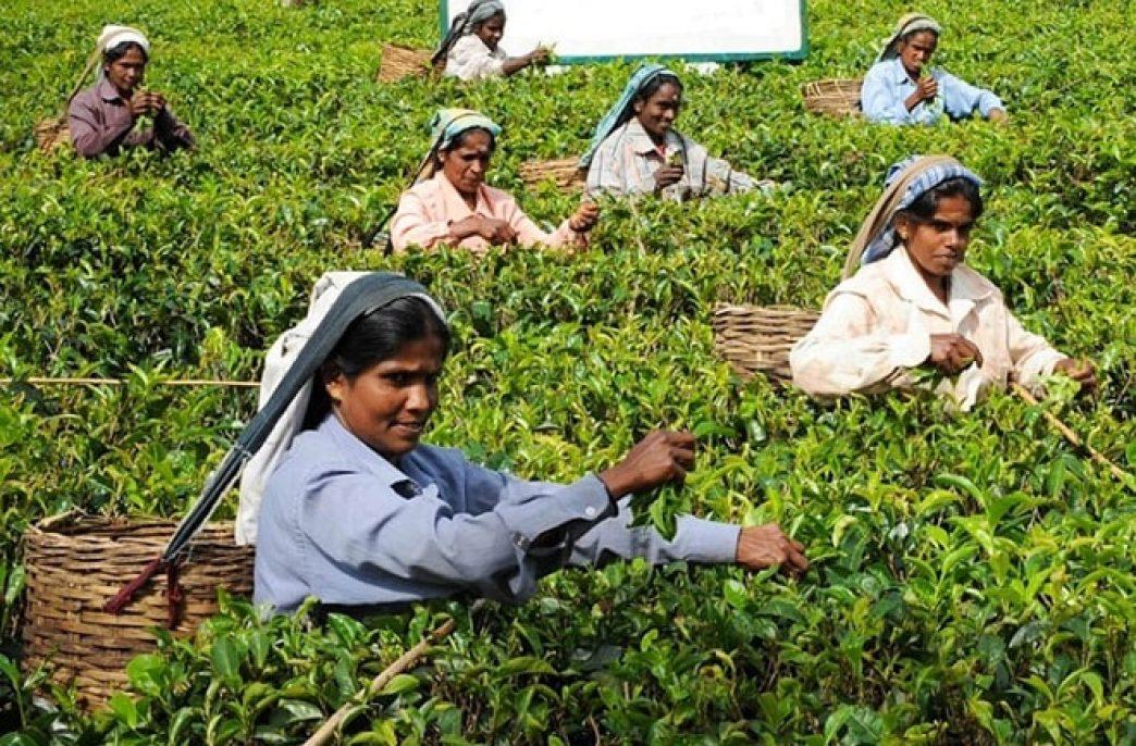 Президент Шри-Ланки призвал перейти на органические удобрения