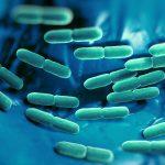 В Нижнем Новгороде разработали новое микробиологическое удобрение