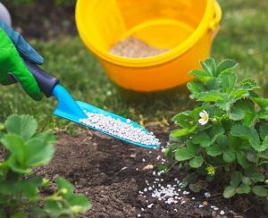 Какие удобрения полезны и необходимы весной для обработки сада и огорода