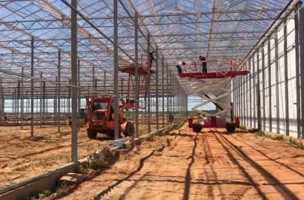 Туровский тепличный комплекс заработает в 3-м квартале