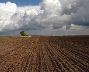Посевные площади в Рязанской области перевалили за 1 млн. га