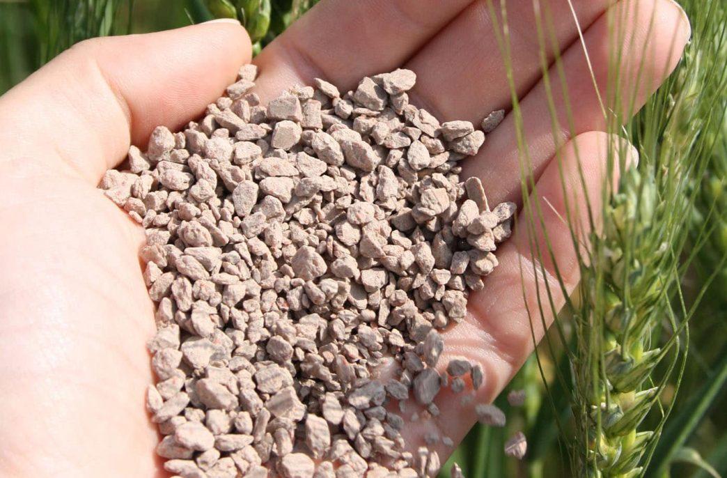 Как дефицит фосфора влияет на эффективность удобрений?