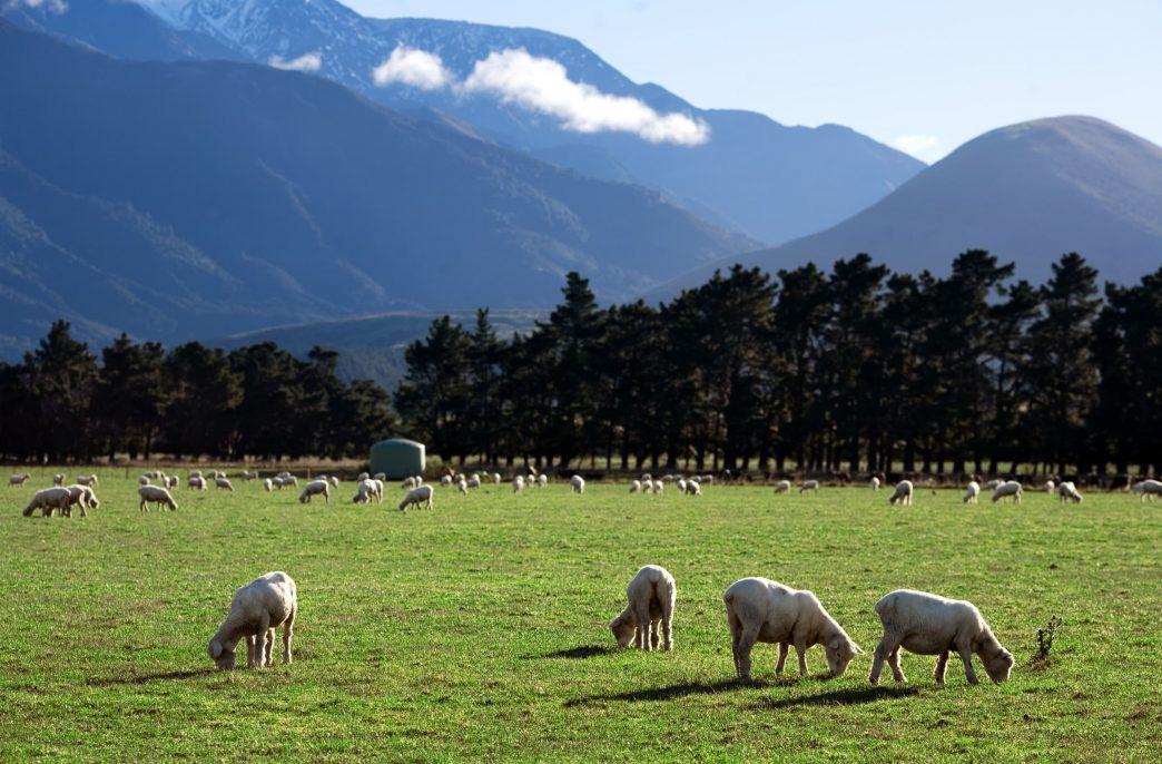 Новая Зеландия развивает аграрные технологии