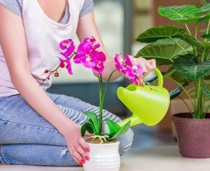Янтарная кислота для выращивания капризных орхидей: как грамотно применять