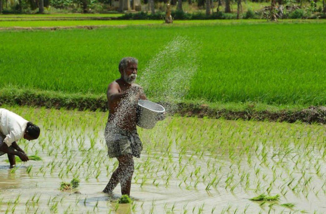 В Индии рекордно вырос спрос на агрохимикаты