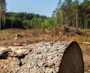 Аргентина запустит спутник для защиты лесов