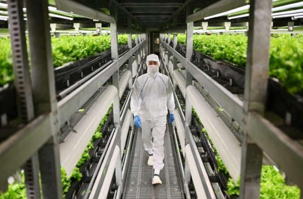 В Японии начала работу новая вертикальная ферма