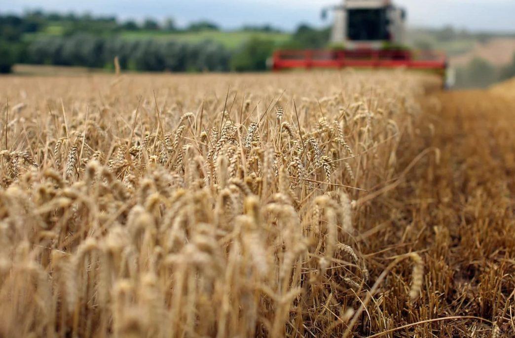 Ученые рассчитали энергозатраты вертикальных ферм