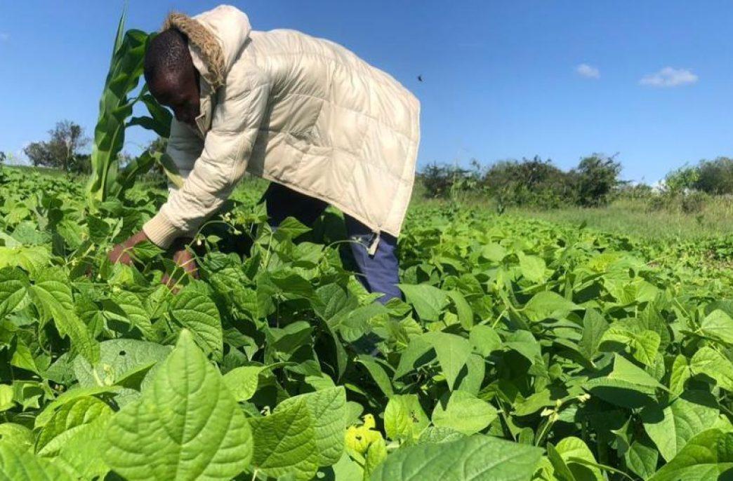 В Танзании выявят поддельные агрохимикаты