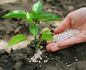 Производство азотных удобрений в России медленно расширяется