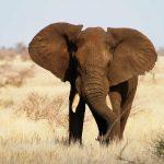 В Ботсване оправдали пестициды
