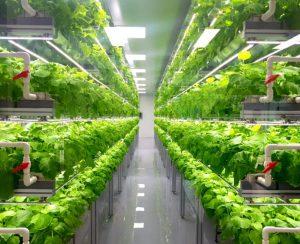 Кувейт обзавелся первой вертикальной фермой