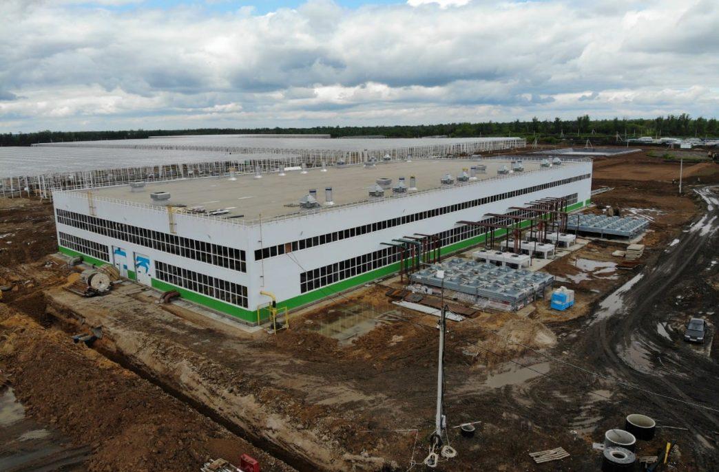 В Тамбовской области откроется новый тепличный комплекс