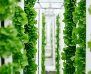 Bayer развивает вертикальное земледелие