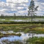 Восстановление торфяников понизит углеродный след