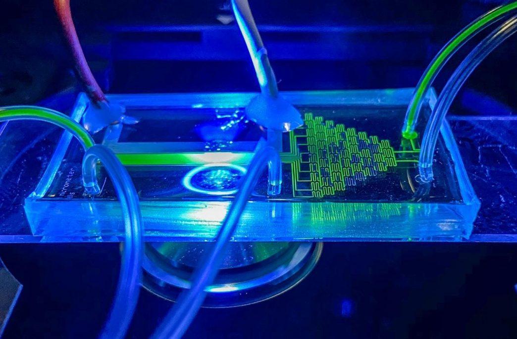 Ученые научились селекции клеток фототрофов