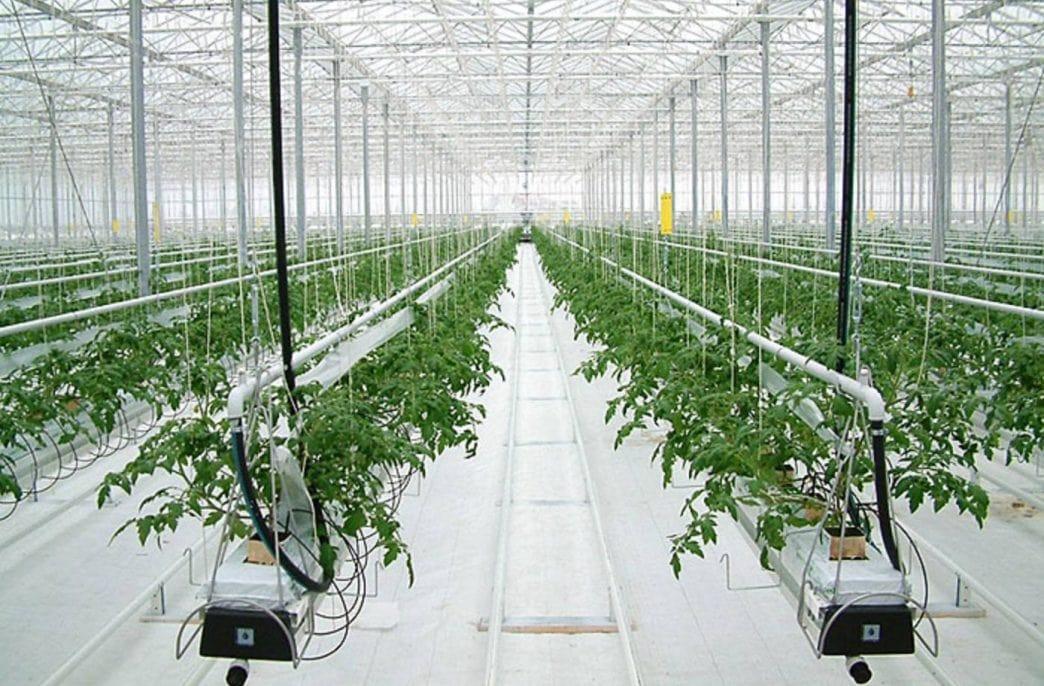 «Овощевод» открыл новый тепличный комплекс