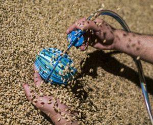 Создан робот для мониторинга качества зерна