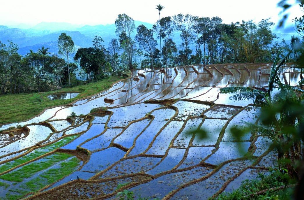 Шри-Ланка закупит 300 тыс. тонн агрохимикатов