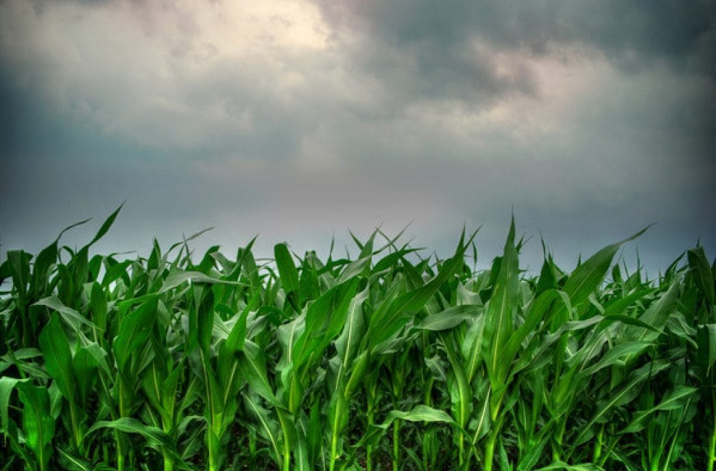 В США создадут систему контроля азота в почве