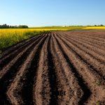 В Татарстане хотят расширить известкование почв