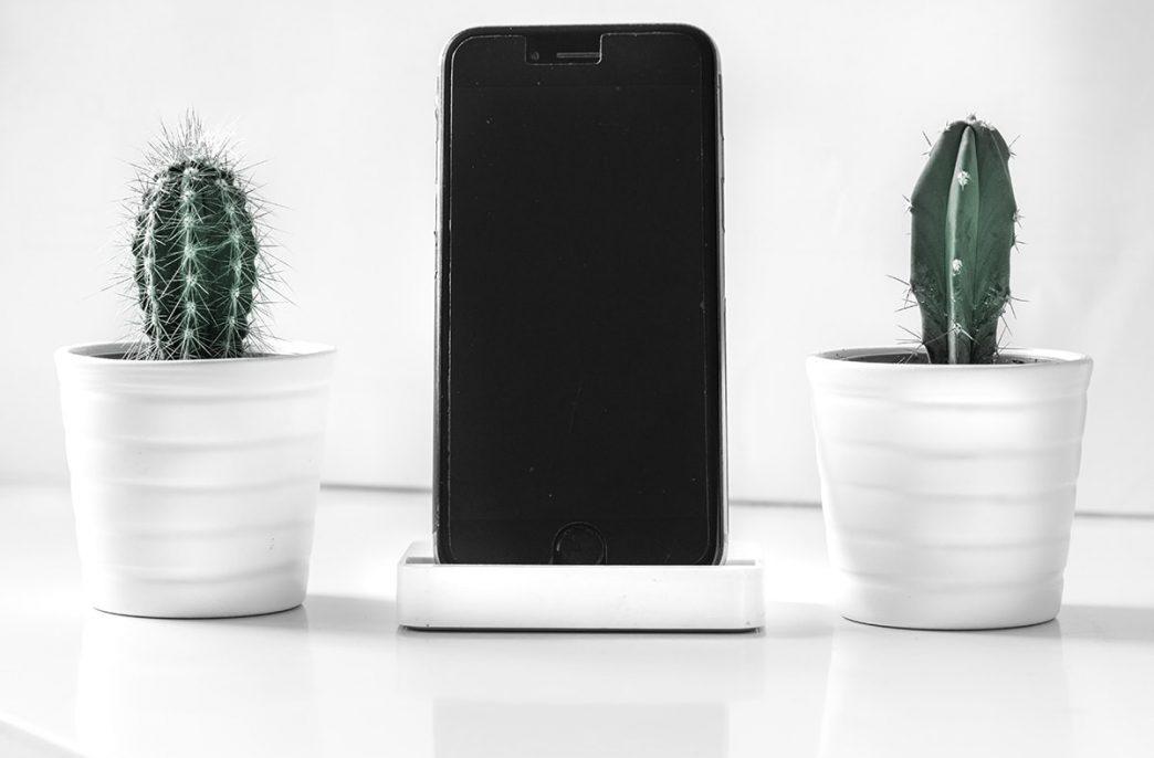9 мобильных приложений, которые помогут узнать растение по фотографии