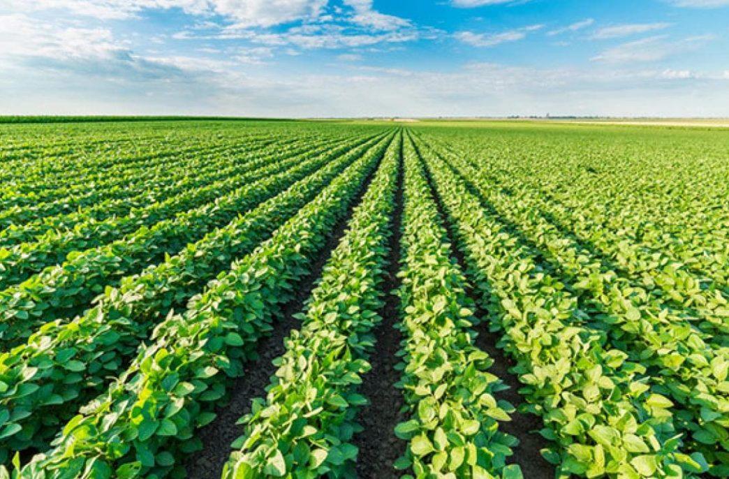 В столице России обсудят будущее агропромышленного комплекса